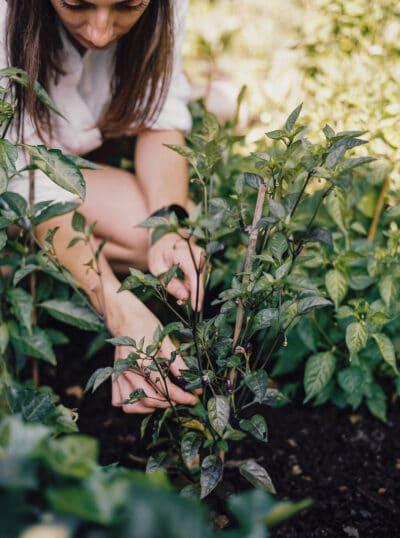 hanke arkenbout photography moestuinfloor juli19 11